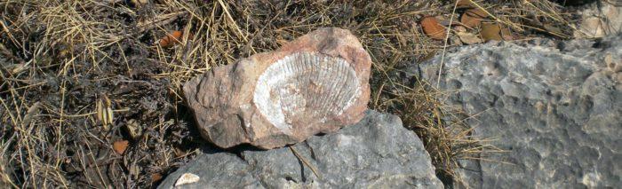 Amb una mica de vista és fàcil trobar fòssils durant l'aproximació