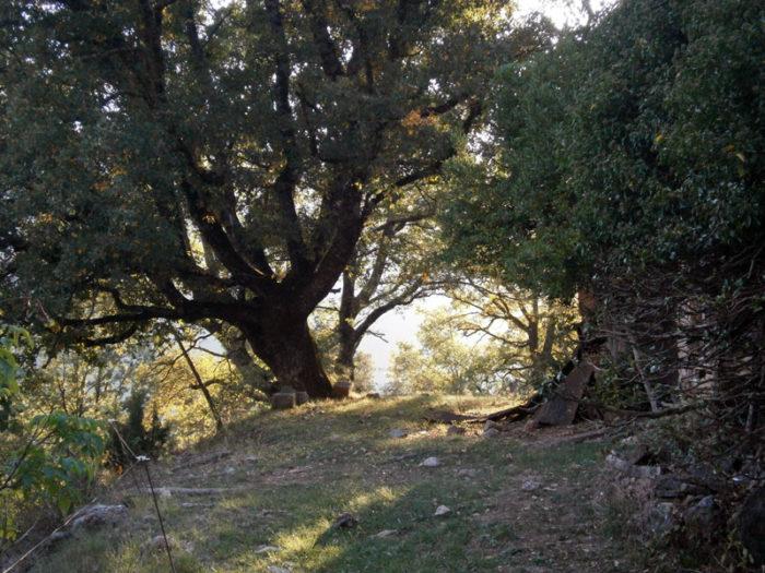 Durant l'aproximació i el descens passem pel costat de Cal Bertran, ara abandonat